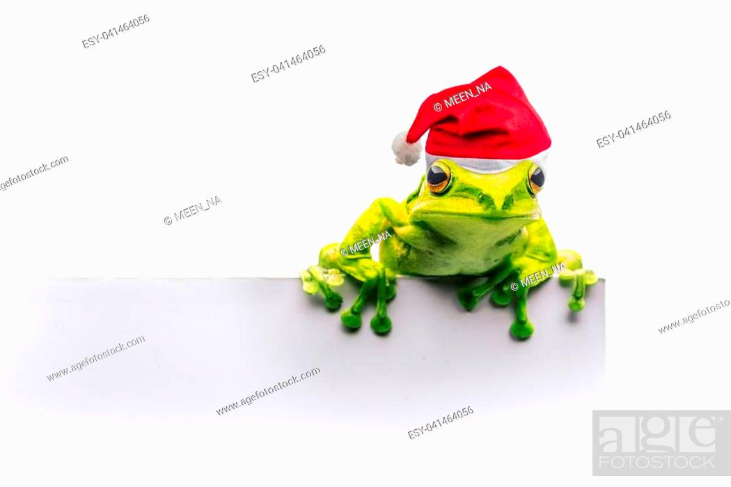Stock Photo: frog with Christmas hat isolated on white background.