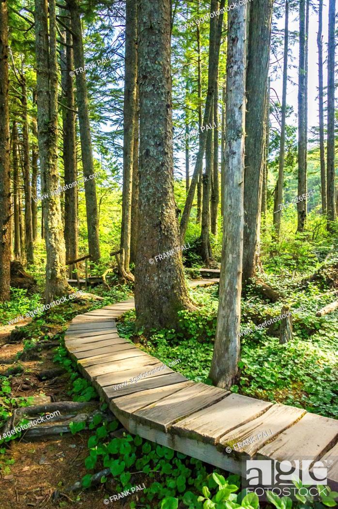 Stock Photo: Hiking trails at Cape Flattery Lighthouse, Tatoosh Island, Olympic National Park, Washington, USA.