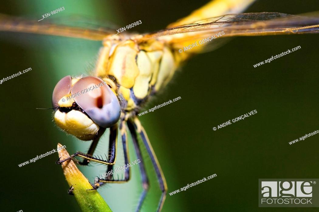 Stock Photo: Dragonfly in Alentejo, Portugal.