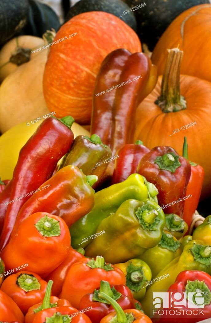 Stock Photo: Organic bell peppers and pumpkins at farmers market, October 2009, Nevada City California.