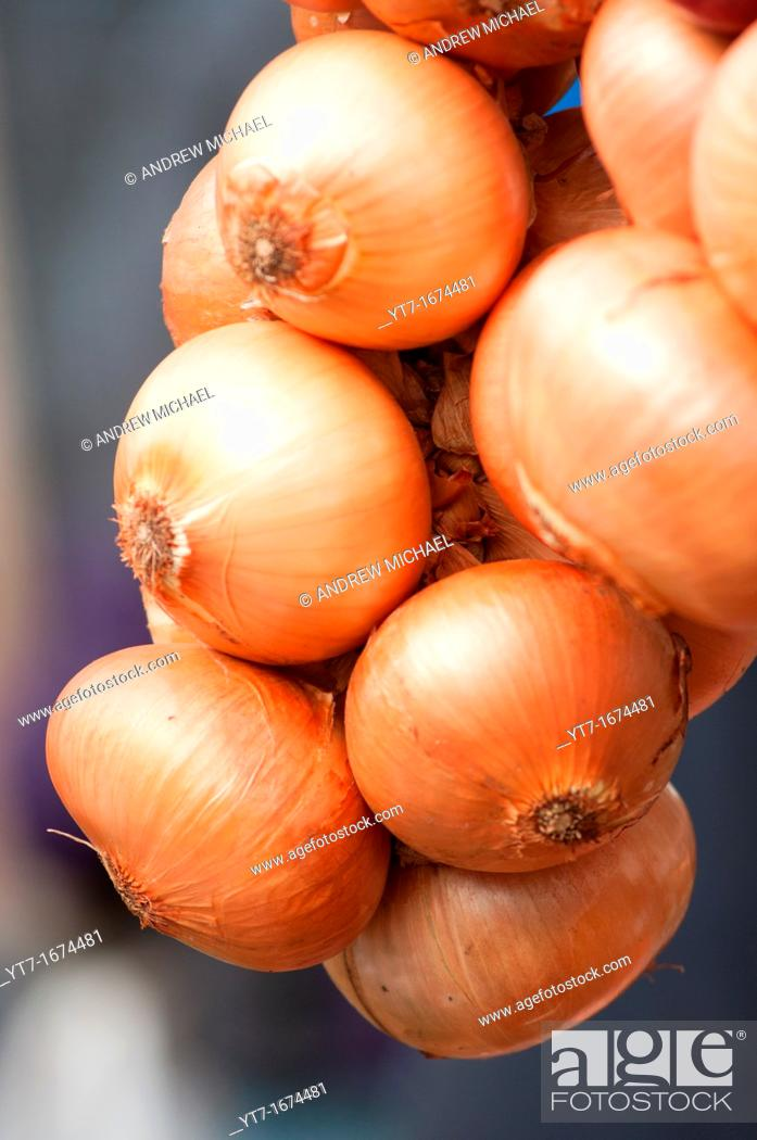Stock Photo: A string of French onions close up.