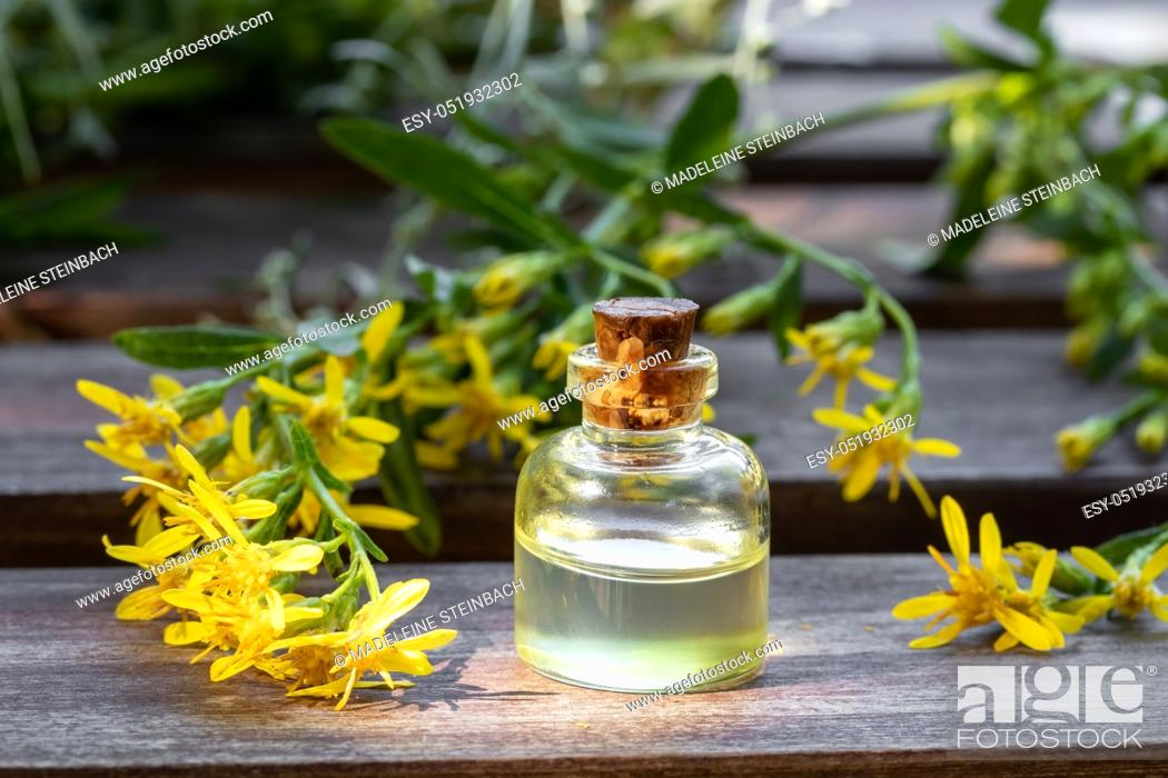 Stock Photo: A bottle of essential oil with fresh European goldenrod, or Solidago virgaurea twigs.