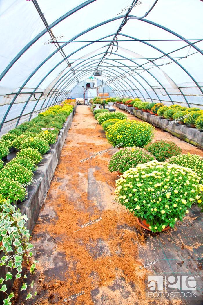 Stock Photo: Greenhouse.