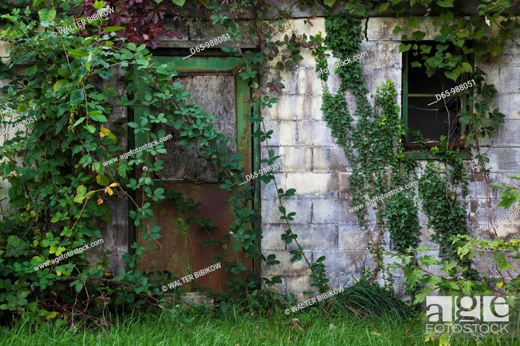 Stock Photo: USA, Maryland, Eastern Shore of Chesapeake Bay, Royal Oak, overgrown house.