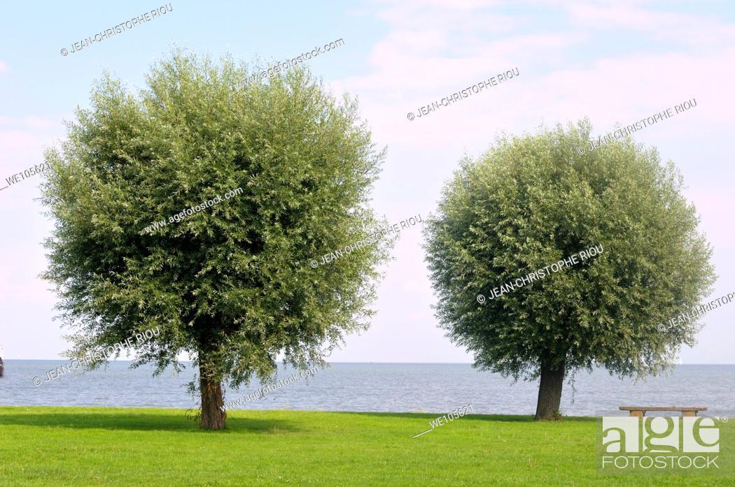 Stock Photo: Two trees.