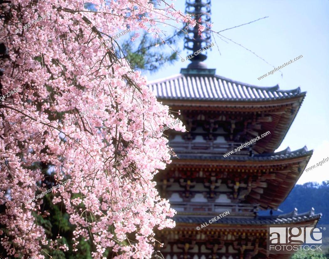 Stock Photo: Cherry Blossom and Pagoda, Kyoto, Japan.