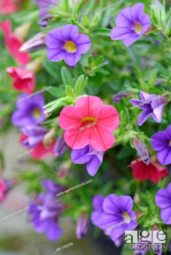 Stock Photo: Differently colored blooms in the flower patch.