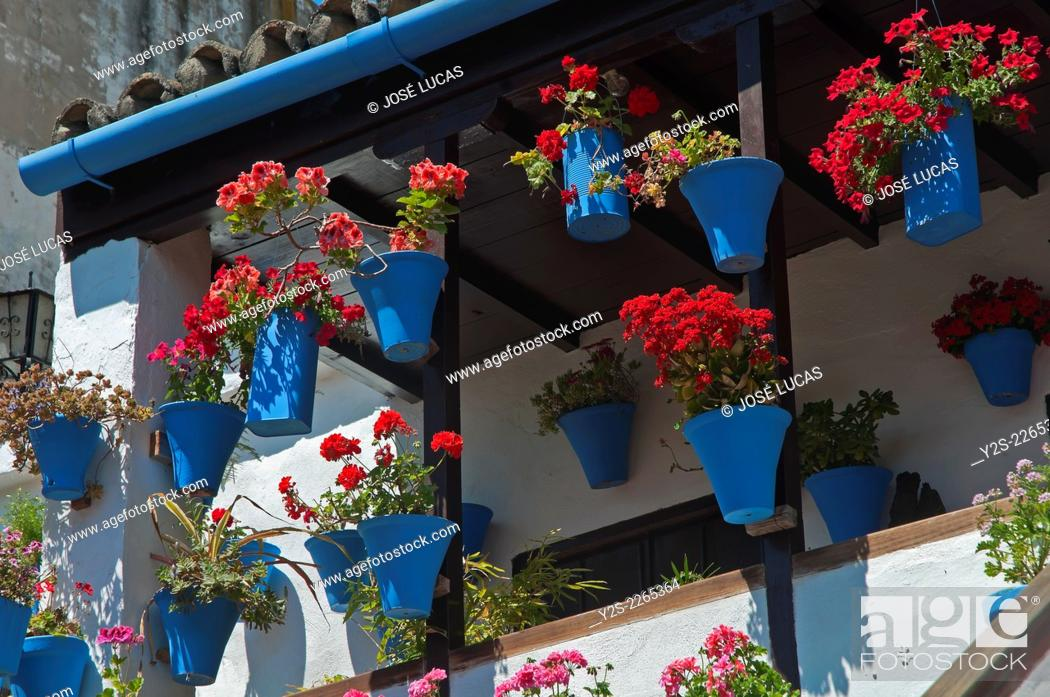 Stock Photo: Typical courtyard -flowerpots, Cordoba, Region of Andalusia, Spain, Europe.