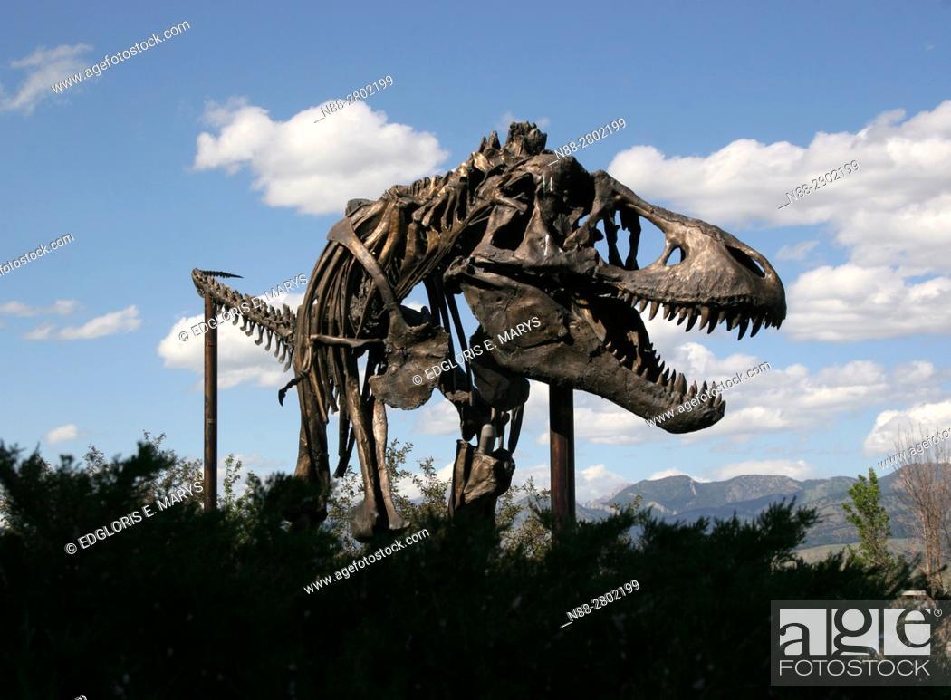 Stock Photo: Tyrannosaurus Rex, Museum of the Rockies, Montana USA.