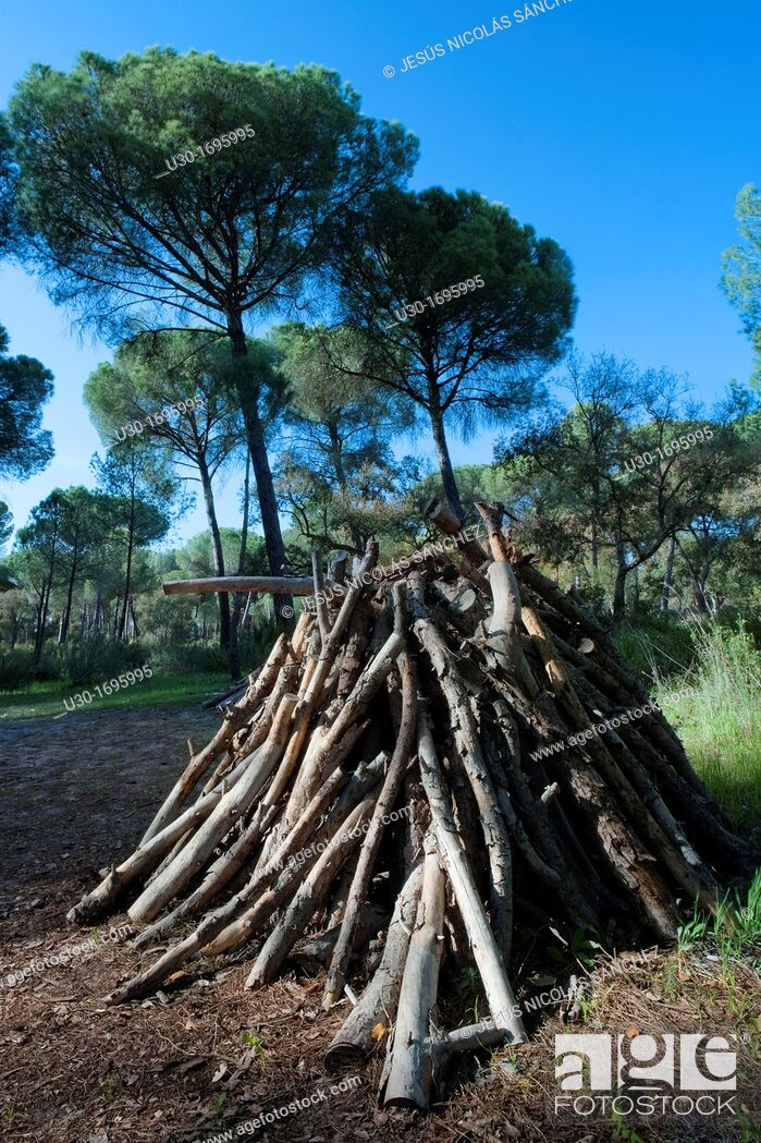 Imagen: Pile of logs in La Balsa village, in Doñana National Park, Huelva province  Andalusia  Spain.