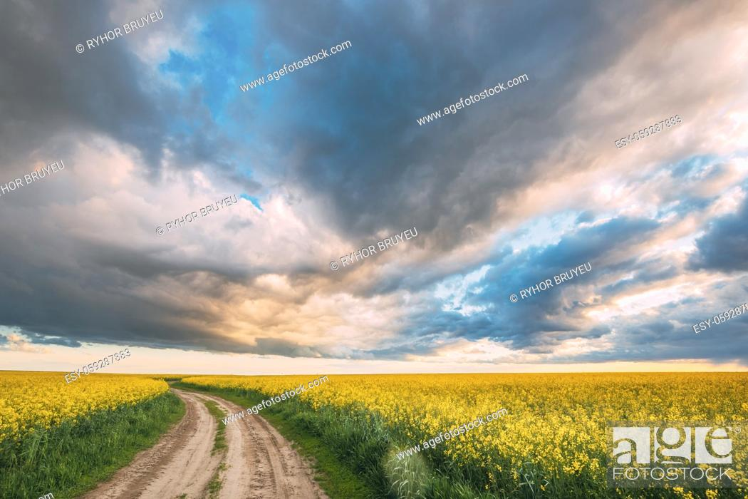 Stock Photo: Elevated View Dramatic Sky With Fluffy Clouds On Horizon Above Rural Landscape Blooming Canola Colza Flowers Rapeseed Field. Country Road.