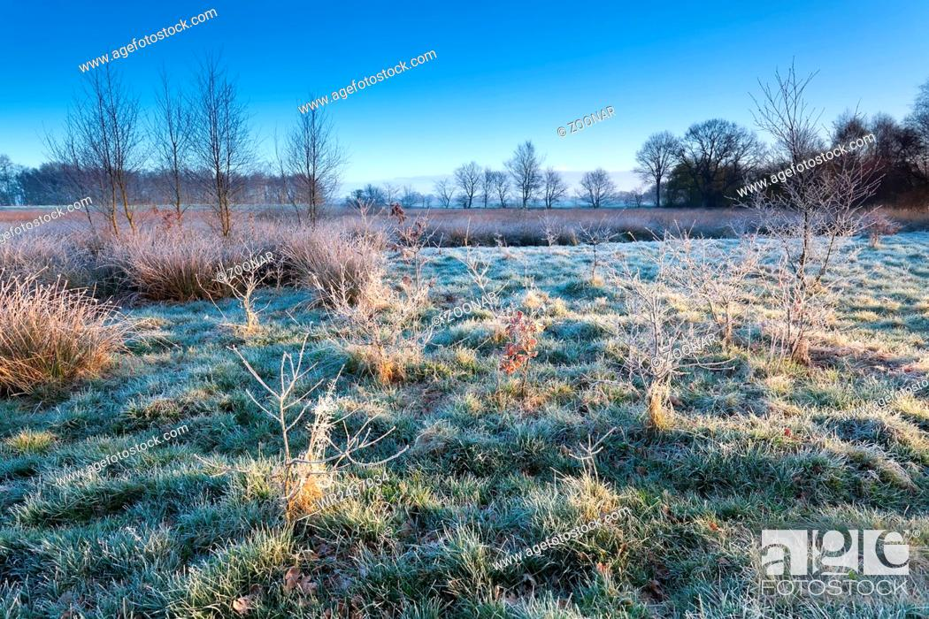 Stock Photo: marsh in morning winter frost.