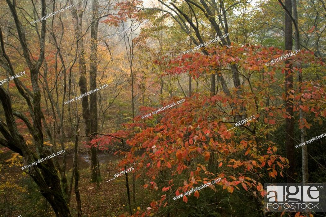 Stock Photo: Autumn, Great Smoky Mountains National Park, TN.