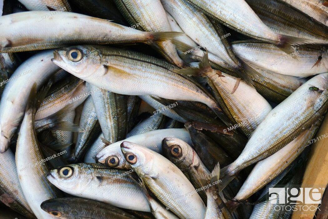 Stock Photo: Fish in an street market in Santorini, Cyclades Islands, Greece.