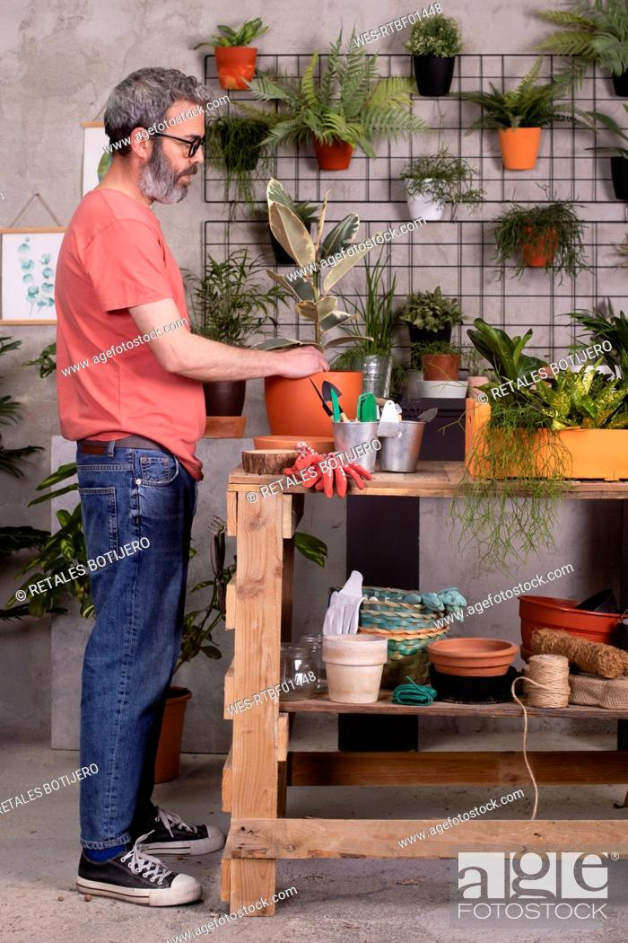 Stock Photo: Mature man planting fig tree in pot on table at nursery.