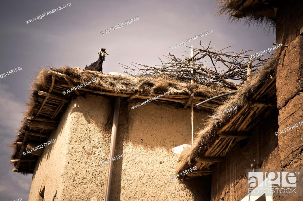 Stock Photo: goat on roof, Azilal, Morocco.