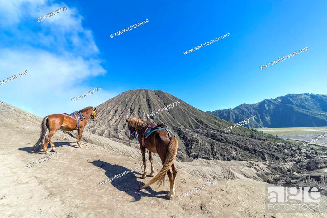Stock Photo: BROMO, INDONESIA - JULY 22, 2016: The horse at Mount Bromo volcano, the magnificent view of Mt. Bromo located in Bromo Tengger Semeru National Park, East Java.