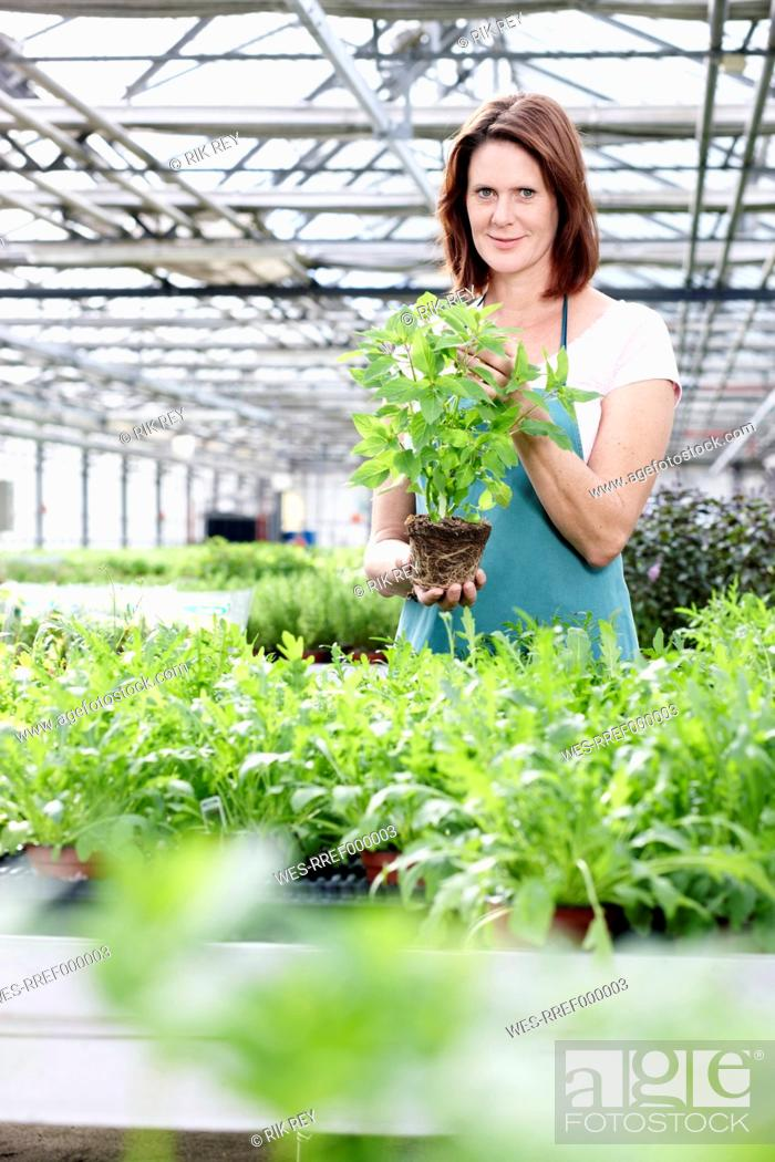 Stock Photo: Germany, Bavaria, Munich, Mature woman in greenhouse with basil plants.