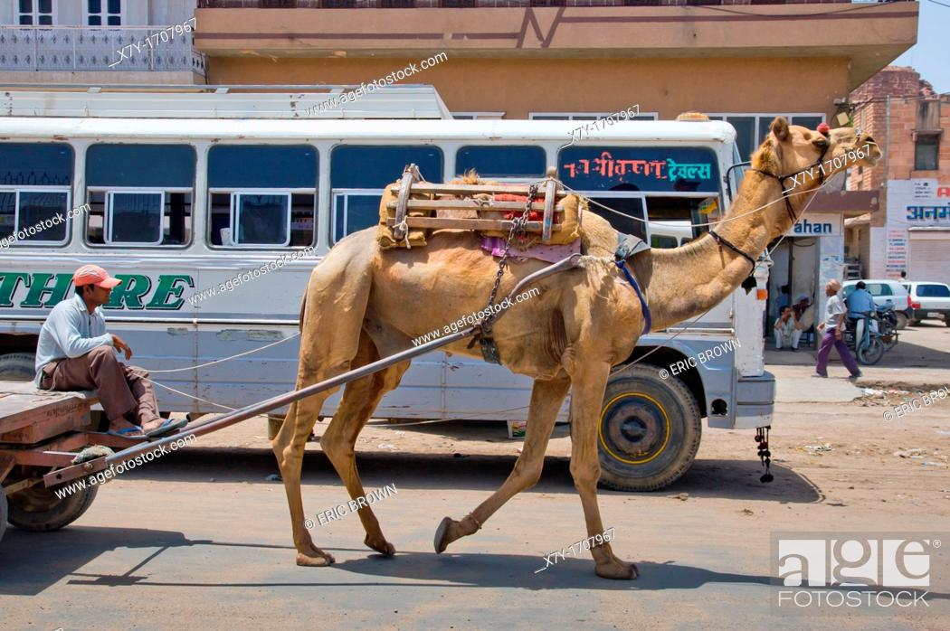 Stock Photo: A camel pulls a cart on the street in Jodhpur, India.