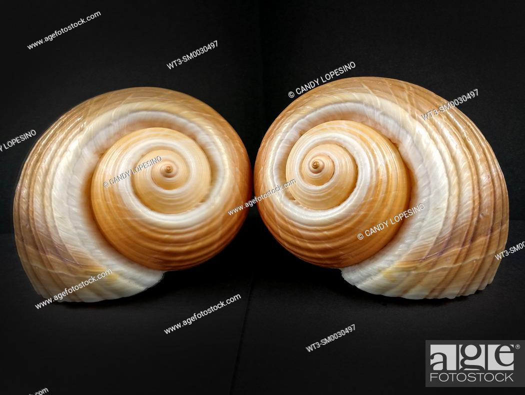 Stock Photo: Natural sea shell on black background reflected in a mirror.
