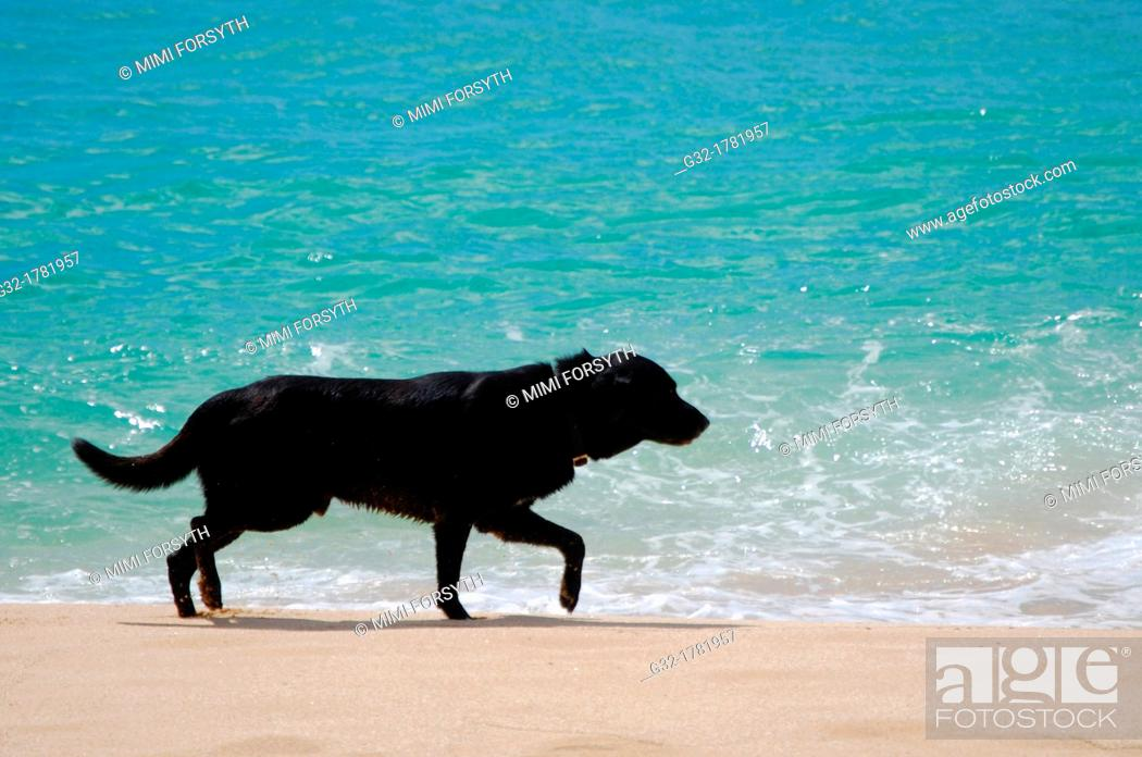 Stock Photo: black dog on beach.