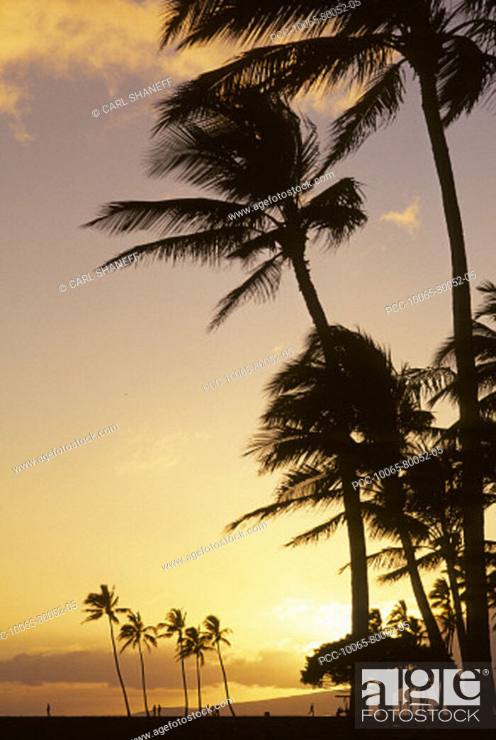Stock Photo: Palm trees and yellow sunset sky with sunball, silhouette of people on the beach.
