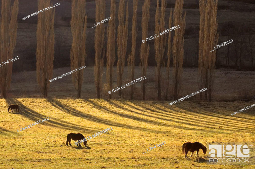 Stock Photo: Horses grazing in Son. Pallars Sobirà. Lleida province. Catalunya. Spain.