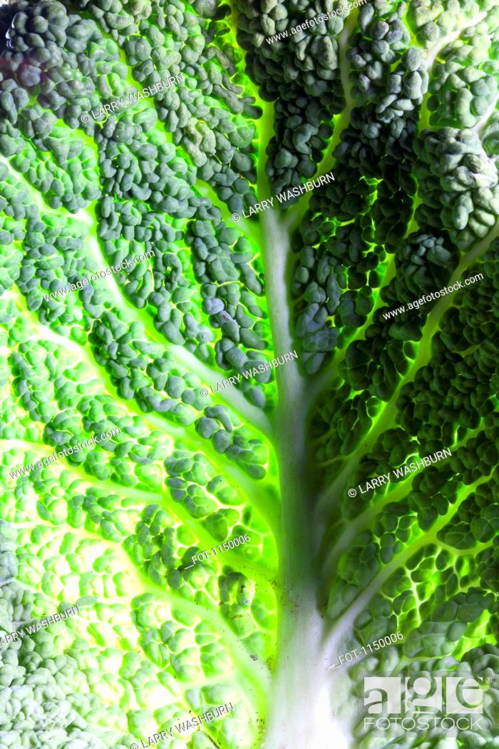 Stock Photo: Leaf of Savoy cabbage, full frame.