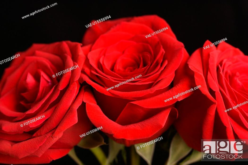 Stock Photo: Close-up of three red roses against black background.