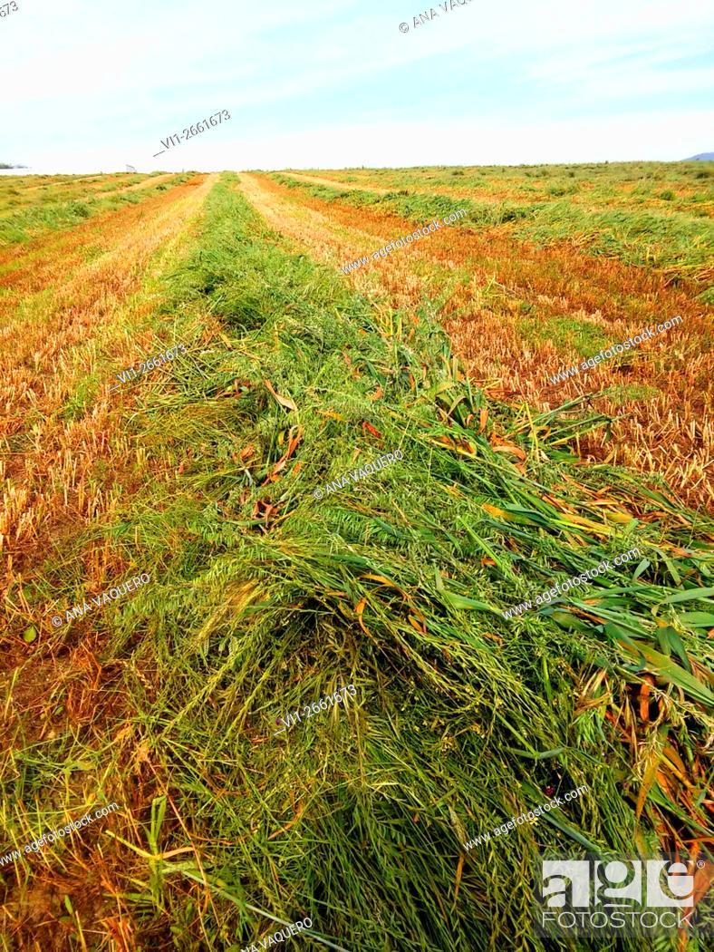 Stock Photo: Farmlands, Miajadas, Caceres province, Extremadura, Spain.