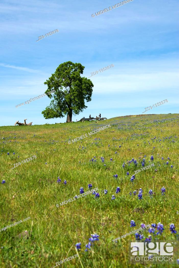 Stock Photo: A solitary oak is set against the sky.