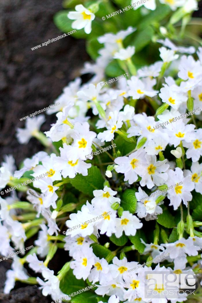 Stock Photo: forest flowers.