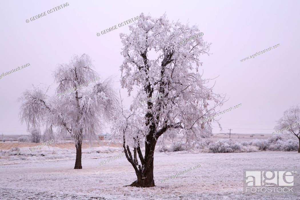 Stock Photo: Frost trees, Minidoka National Historic Site, Idaho.