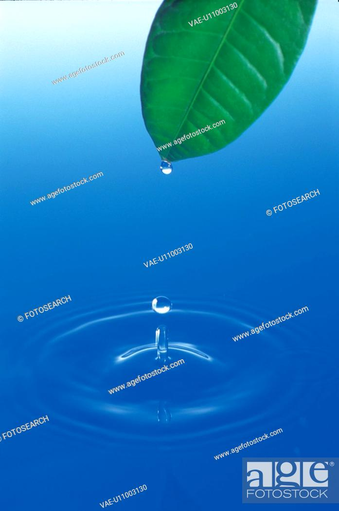 Stock Photo: natural phenomenon, nature, water, waterdrop, leaf.
