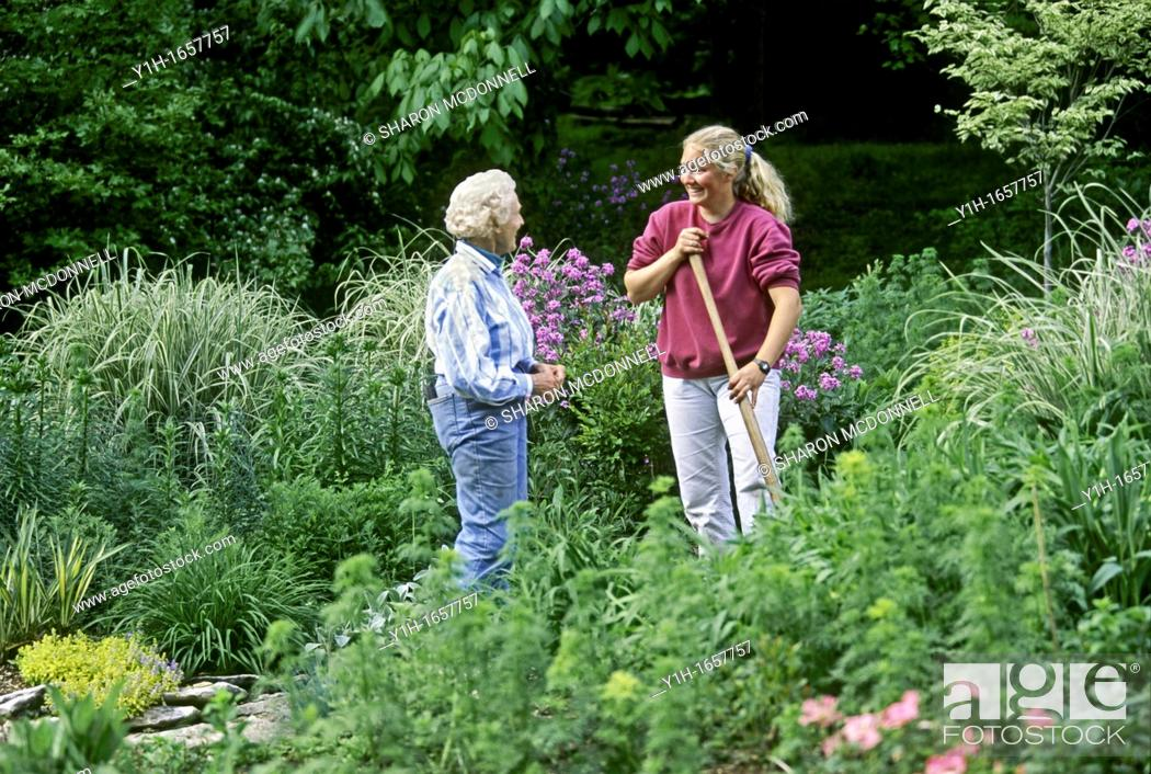 Stock Photo: Mature woman and young woman confer in blooming garden on summer evening about gardening.