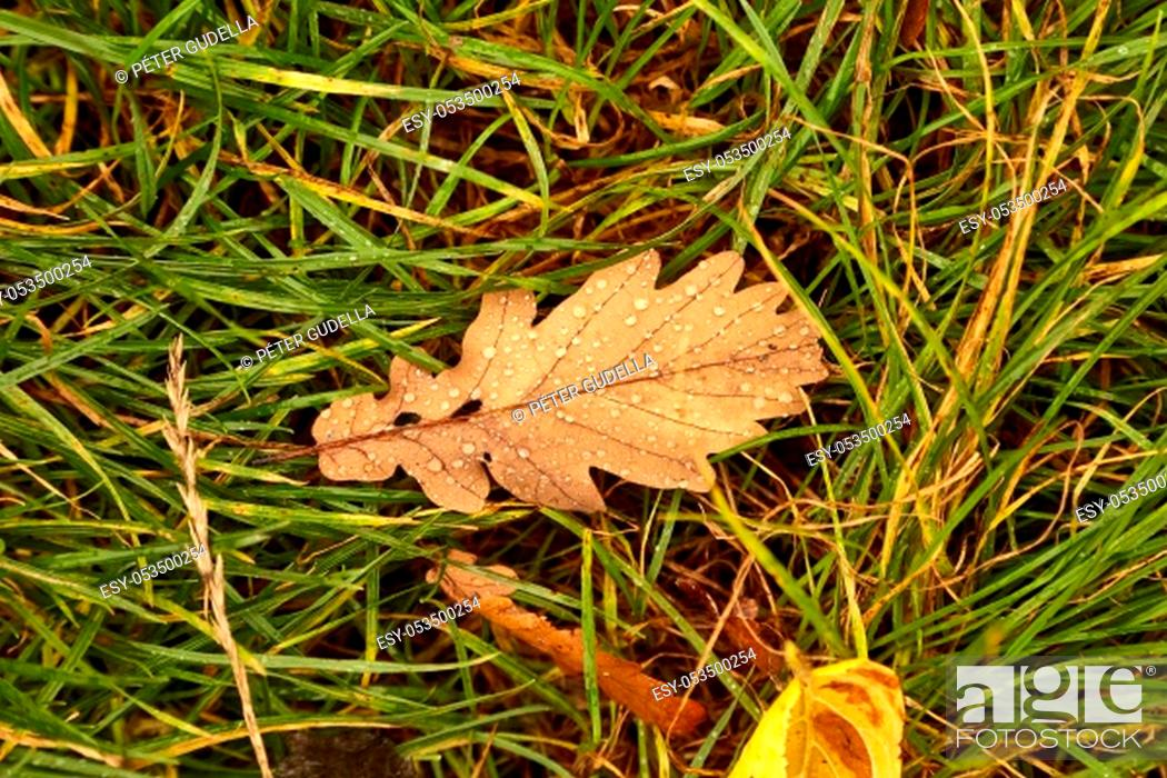 Photo de stock: Fallen leaf on grass covered with raindrops, wet.