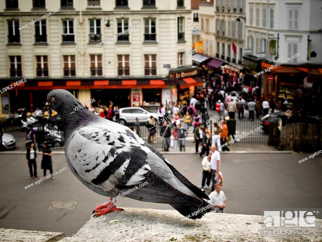 Stock Photo: Dove, Paris, France.