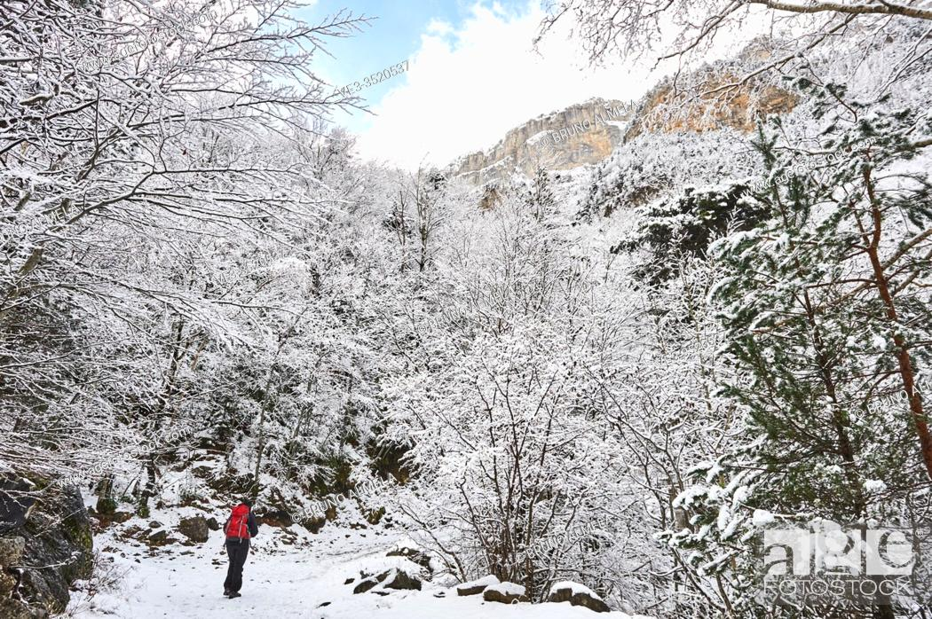 Stock Photo: Pyrenees: a woman hiking along snowy path in the National park of Ordesa and Monte Perdido (Huesca province, Aragon region, Spain).