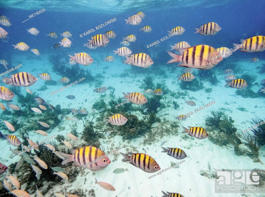 Stock Photo: Fishes near Stingray City, Grand Cayman, Cayman Islands.