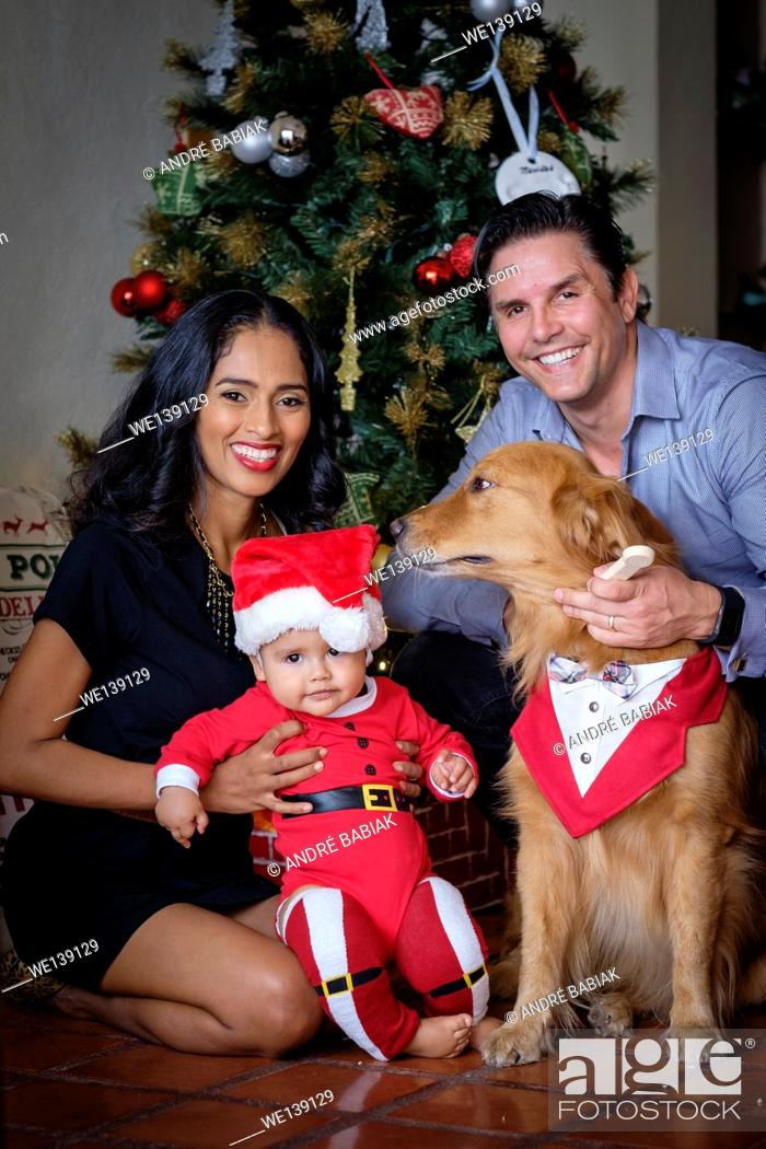 Stock Photo: Multi-ethnic family of hispanic mother and caucasian father with mixed race baby boy and Golden Retriever dog gathered in front of the Christmas tree in their.