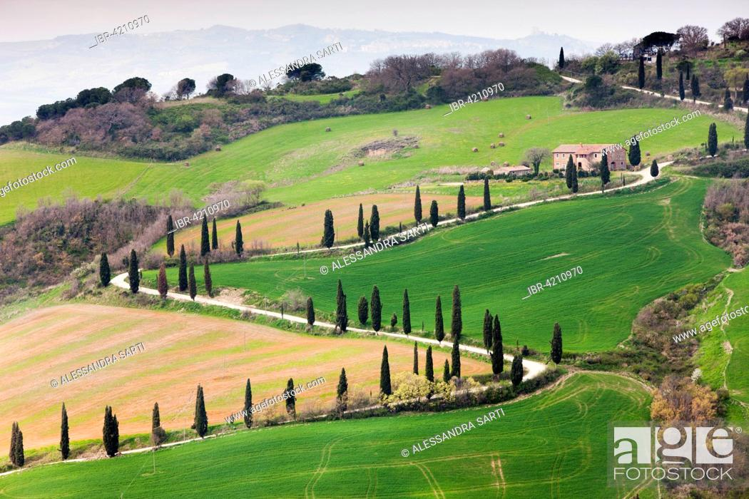 Stock Photo: Cypress avenue La Foce, Tuscany, Italy.