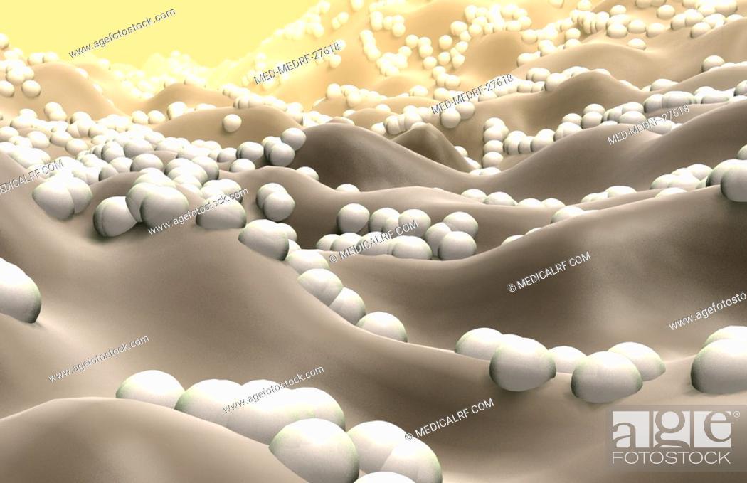 Stock Photo: Cocci bacteria.