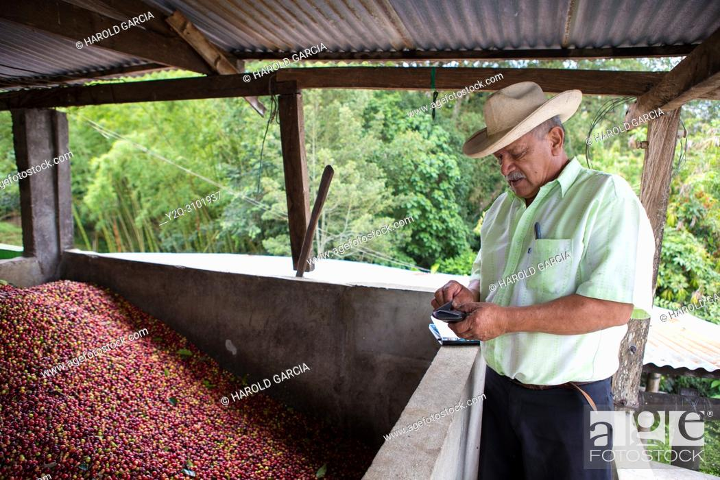 Imagen: Farm owner next to unload coffee beans collected in a pool to process them in the plantation.