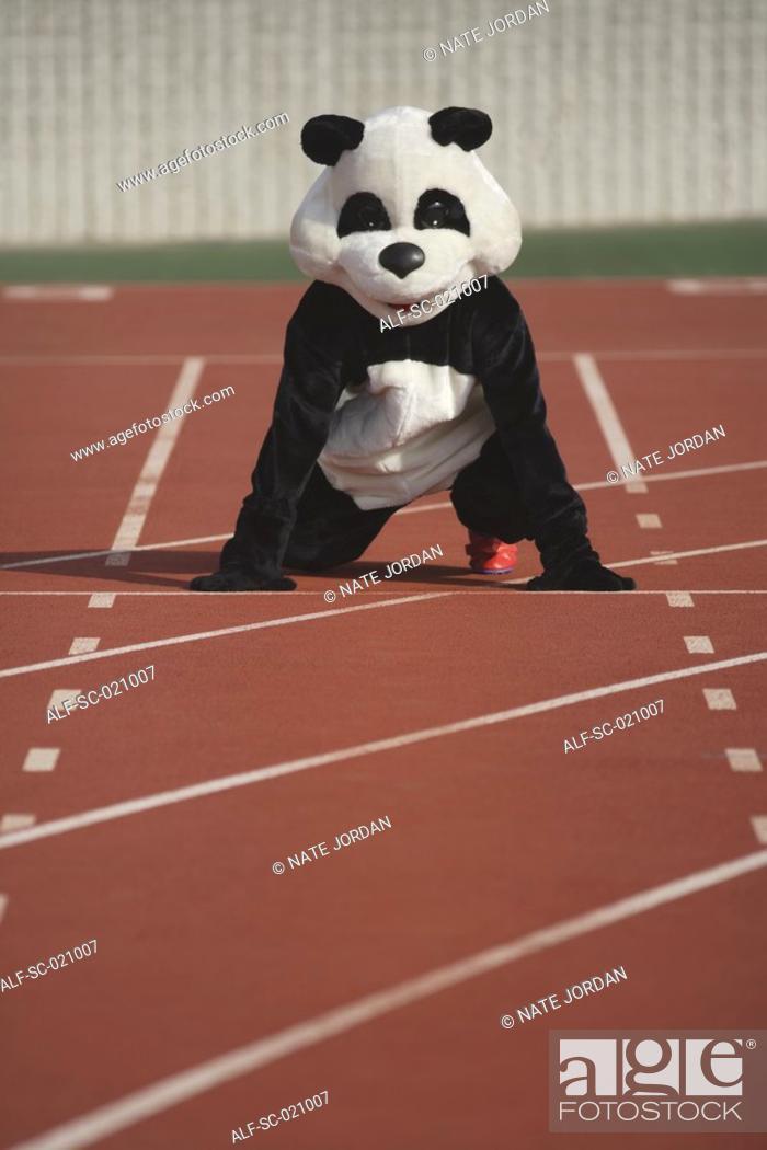 Stock Photo: Panda Crouching on a Track.