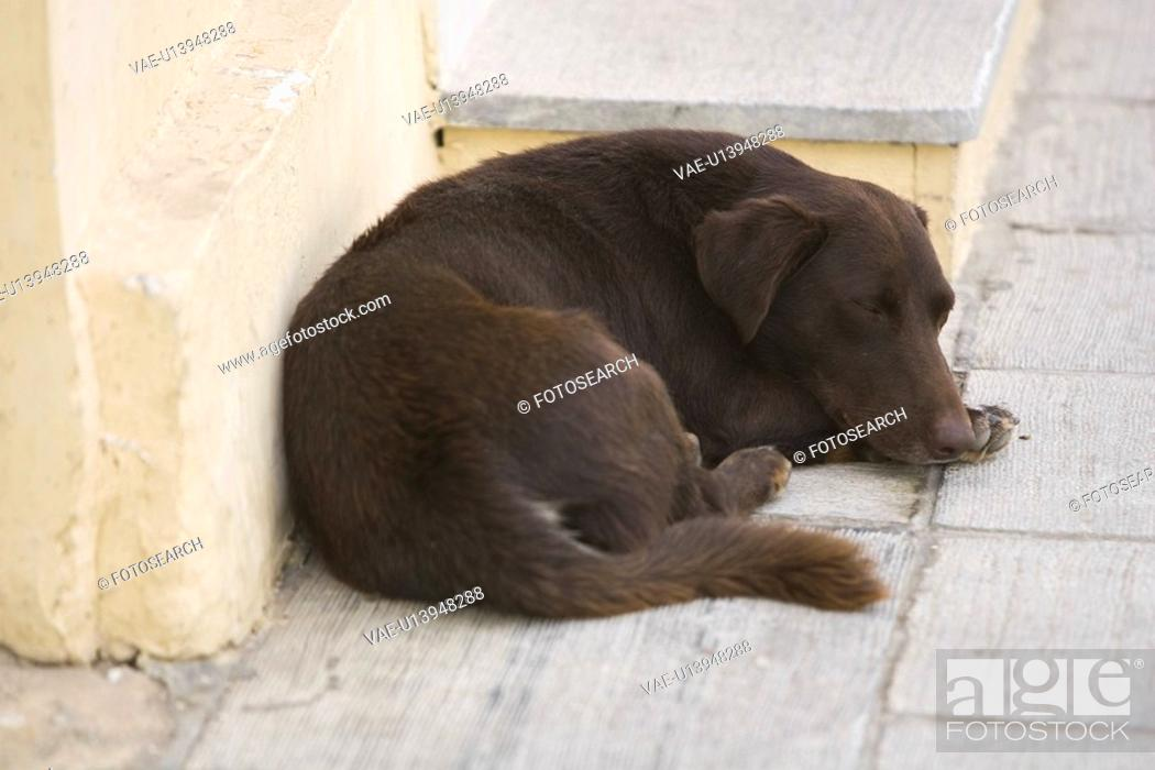 Stock Photo: Black, Dog, Day, Close-Up, Adult Animal.