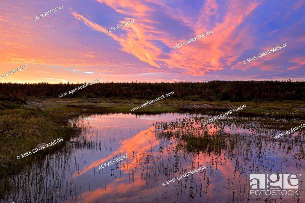 Imagen: Morning light reflected in wetland Belburns Newfoundland & Labrador Canada.