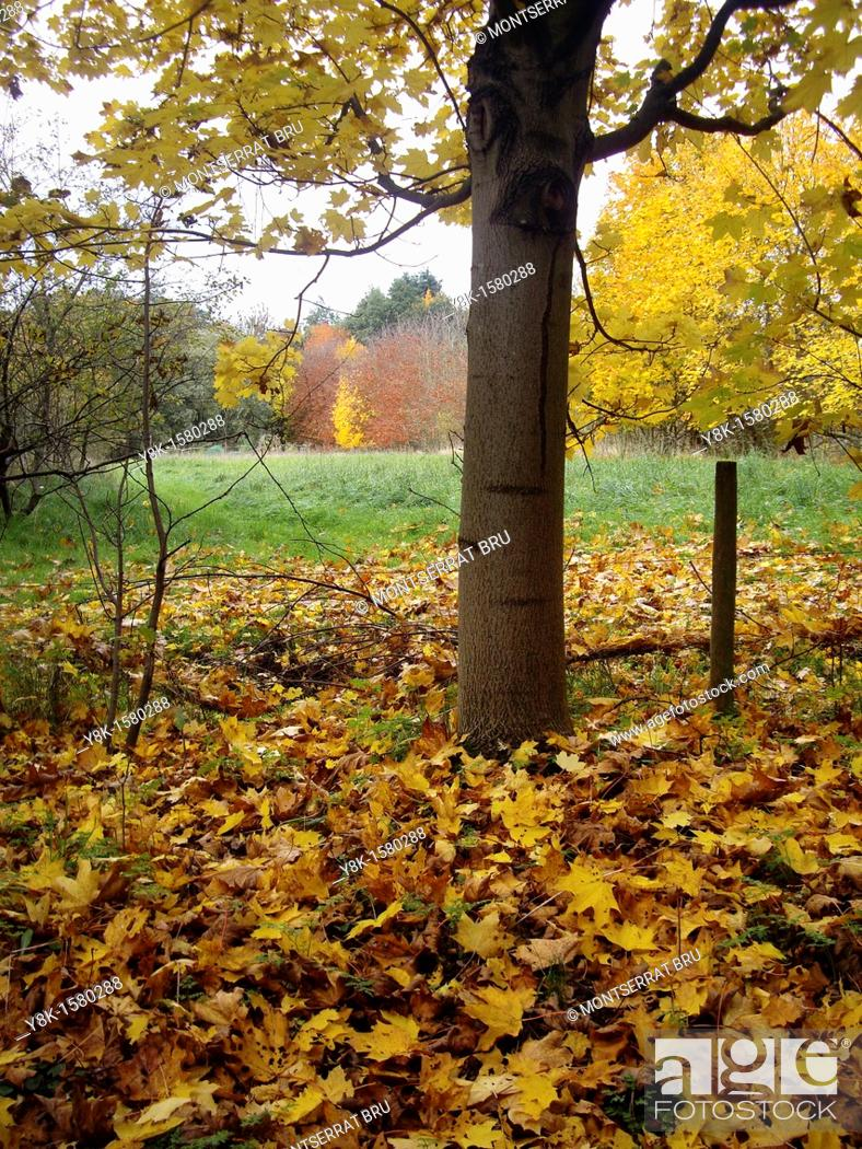 Stock Photo: Fallen leaves carpet.