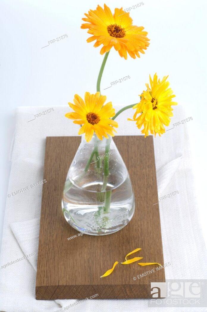 Imagen: Pot marigold in vase.