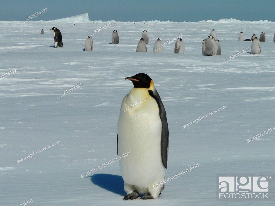 Imagen: Antarctica.
