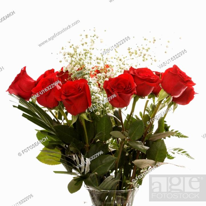 Stock Photo: Bouquet of long-stemmed red roses with baby's breath against white background.